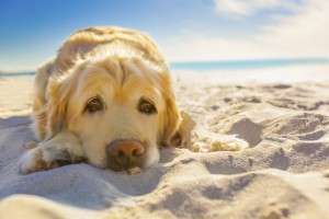 10 Beach Safety Tips for Dogs